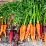 Vegetables_carrot